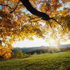 1446_thumb_autumn_leaves